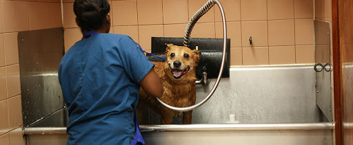 mobile pet grooming sweetwater fl