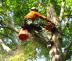 Tree Removal Orlando